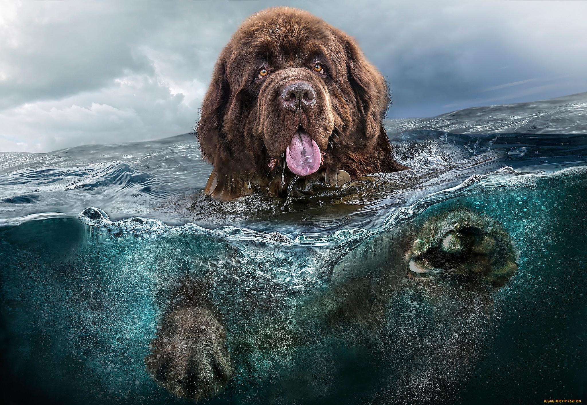 оставила картинки вода для животных бесплатно обои